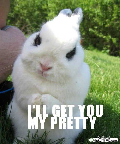 Pictures Of Animals With Quotes: That Is One Evil Bunny! Lol