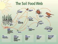 Soil biology primer, via US Dept of Agriculture, Natural Resources Conservaction Service. Soil and landscape, organic matters, soil quality.