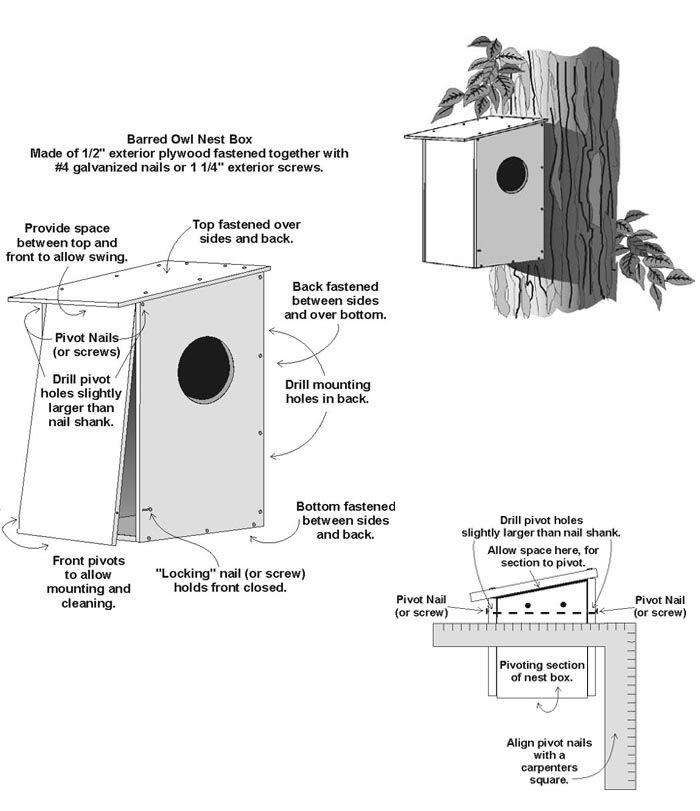 Image detail for -Wild Acres - Barred Owl Nest Box Plans ...