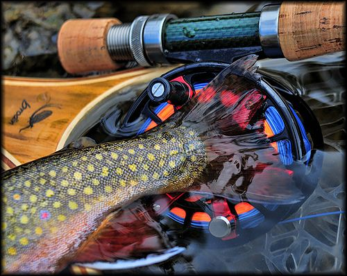 Another great trout shot.