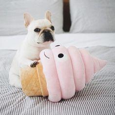 Piggy and the Ice Cream Cone, @piggyandpolly on Instagram ❤❤