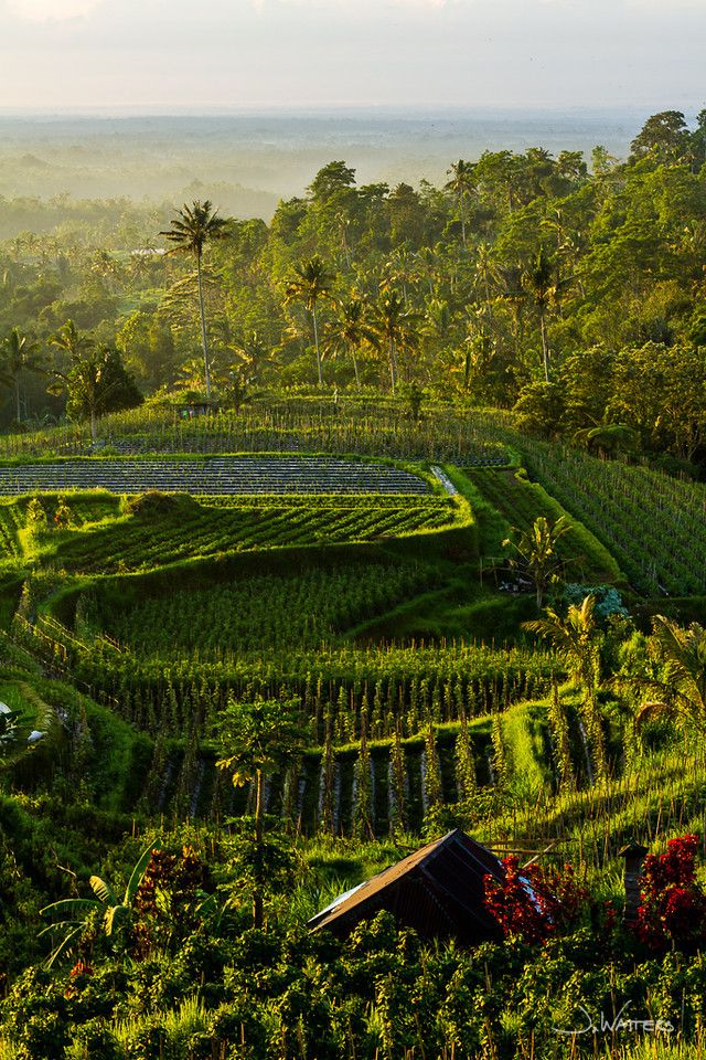 Village Above the Clouds, Desa Atas Awan, Bedugul, Bali, Indonesia