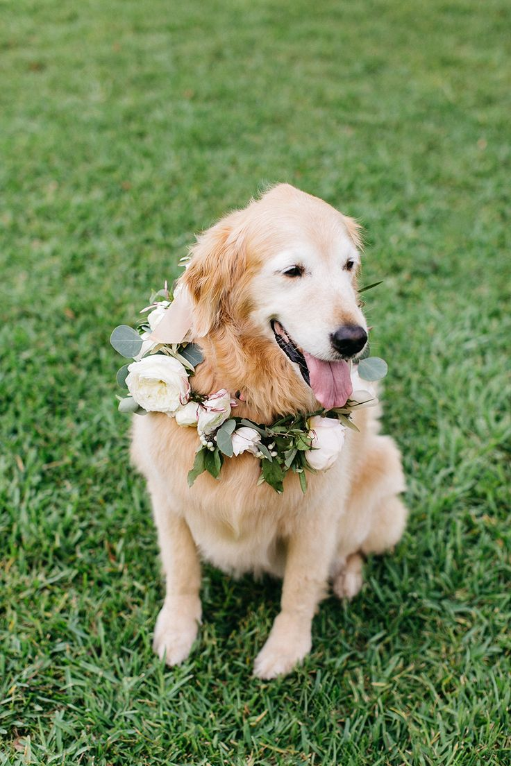 pets at weddings - photo by Caroline Ro http://ruffledblog.com/greenery-filled-charleston-wedding