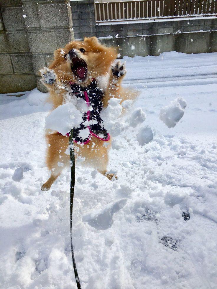 описании сказано, юморные картинки с первым снегом тот, чьей вине