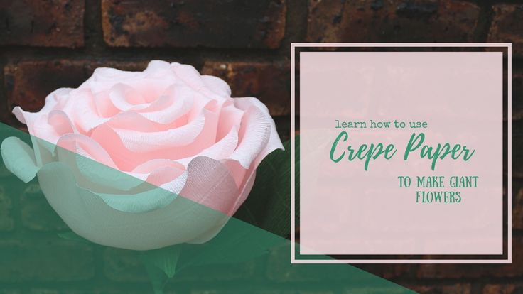 Learn to make these giant flowers from crepe paper! Everything you need is available at our online store!