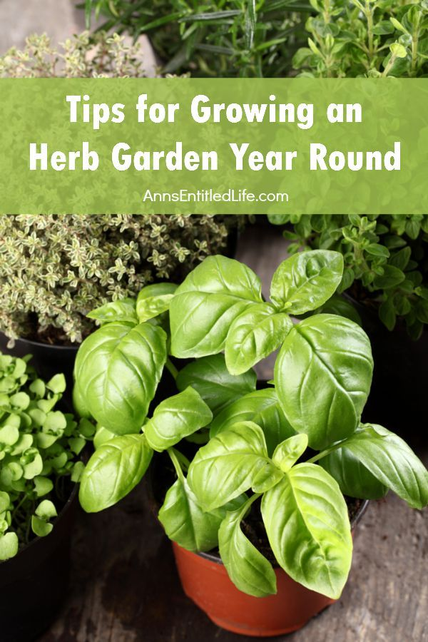 Best 25+ Growing Herbs Ideas On Pinterest | Growing Herbs Indoors, Herbs  Garden And Growing Plants Indoors
