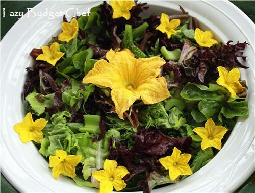 Squash Flower Salad with Tatzaki Sauce Dressing Recipe