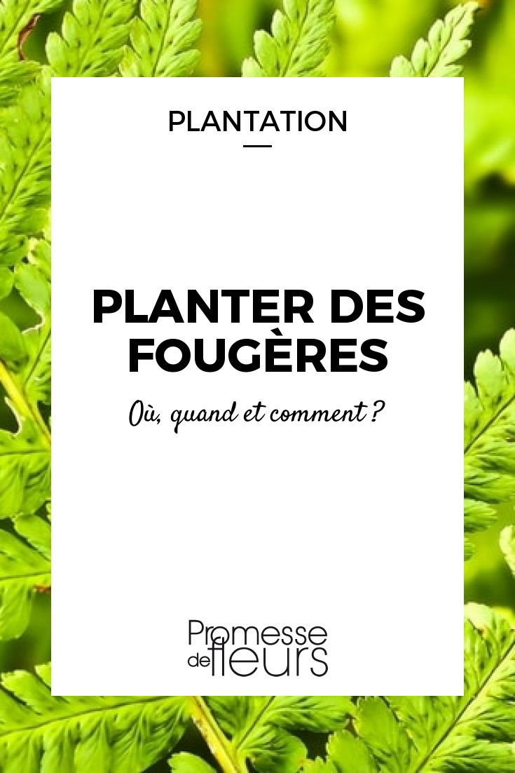25 best ideas about foug res de jardin on pinterest foug res plantes d 39 ombre de jardin et. Black Bedroom Furniture Sets. Home Design Ideas