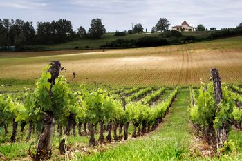 French Wine Facts & Themes