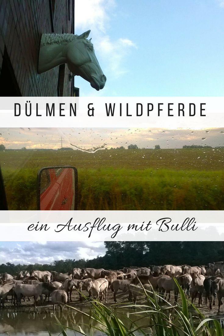 Ein spontaner Kurztrip mit dem Bulli ins Münsterland - Dülmen und die Wildpferde. #kurzreise #Wildpferd