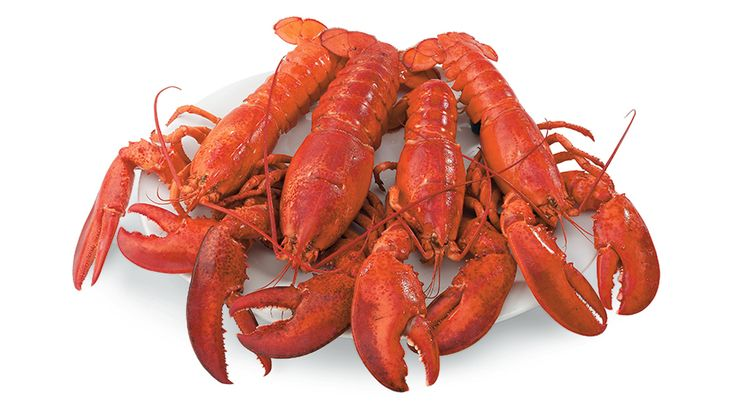 Get live Maine lobsters online, caught fresh and delivered right to your door with free overnight shipping from Maine Lobster Direct!