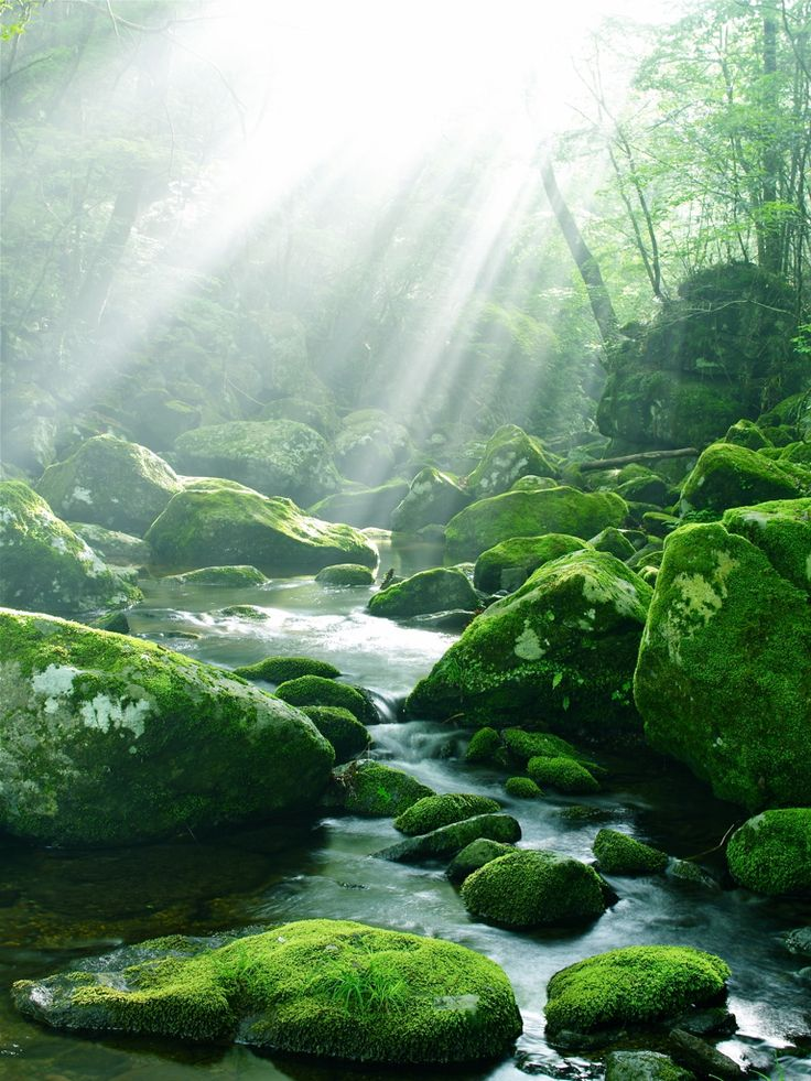菊池渓谷 Kikuchi gorge, Kumamoto, Japan #Green #緑