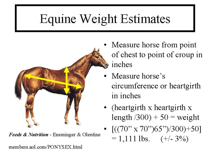 measuring horse weight or weight calculator