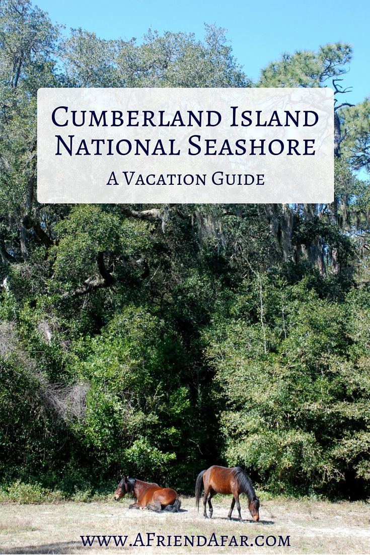 Cumberland Island Vacation Guide - A Friend Afar