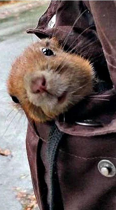 A squirrel in my pocket...