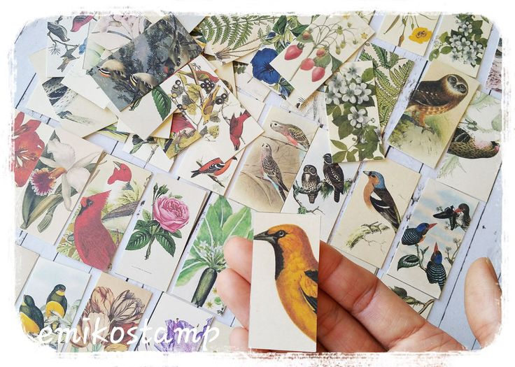 32 Vintage Bird,Flower paper ephemera,scrapbook ephemera art,Snailmails,Card in Crafts, Scrapbooking & Paper Crafts, Scrapbooking | eBay!