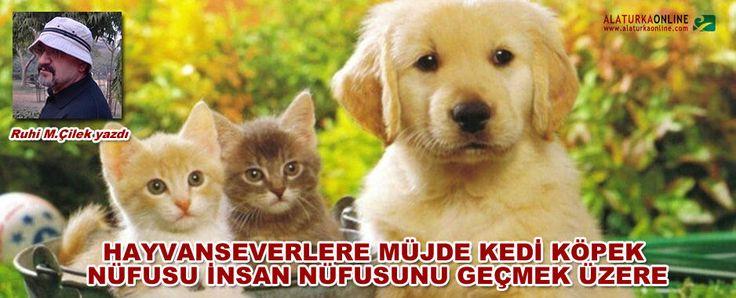 Hayvanseverlere Müjde Kedi Köpek Nüfusu İnsan Nüfusunu Geçmek Üzere