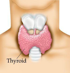 thyroid remedies