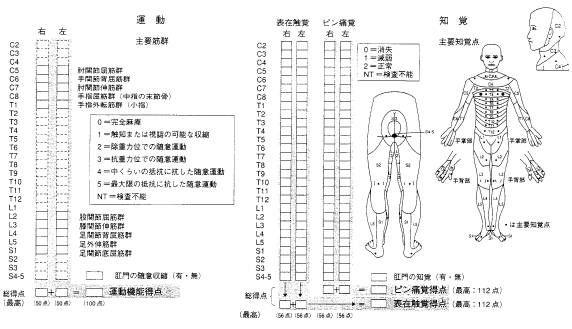 ■ 脊髄損傷の評価尺度