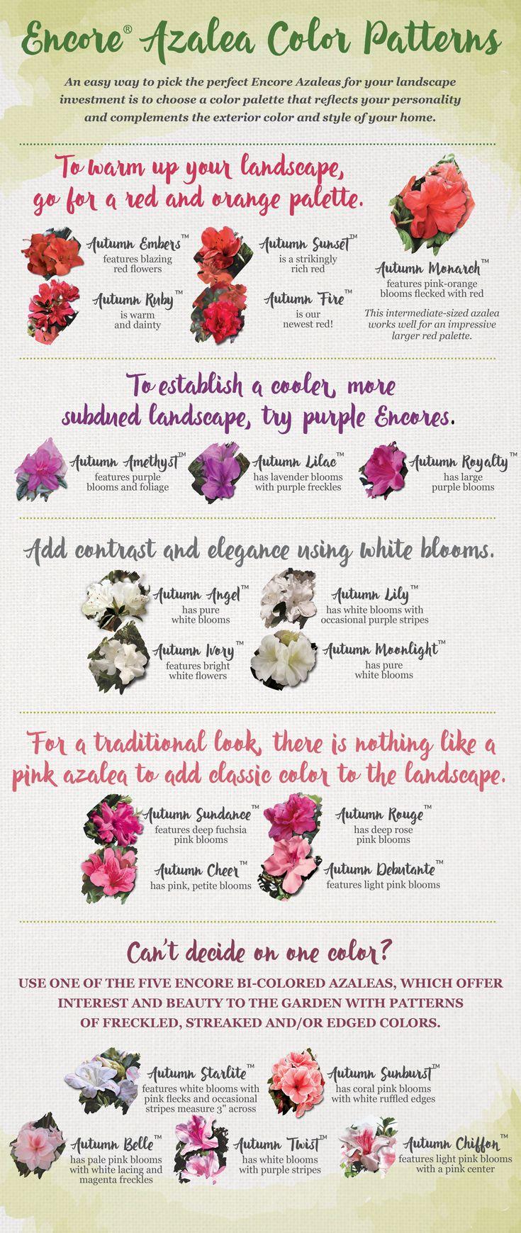 best Draughon images on Pinterest Flowers garden Flower