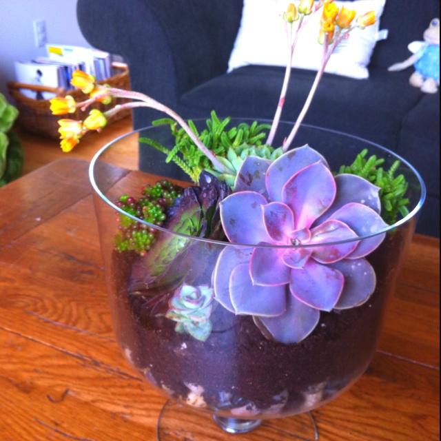 Succulent Planter terrarium