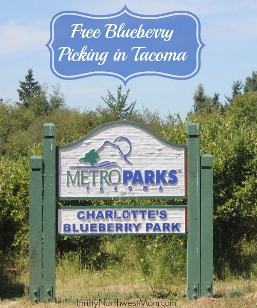 Free Blueberry Picking in Tacoma at Charlotte's Blueberry Park