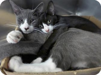 Best 25+ Kittens for a...