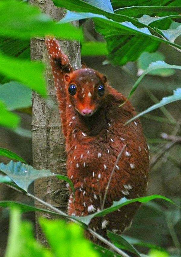 Mejores 284 imágenes de wombat en Pinterest | Vombatidae, Animales y ...