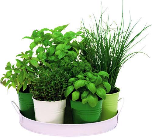 Výsledok vyhľadávania obrázkov pre dopyt bylinková záhrada doma