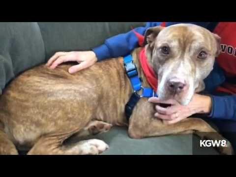 Free pet adoption at Willamette Humane Society this weekend