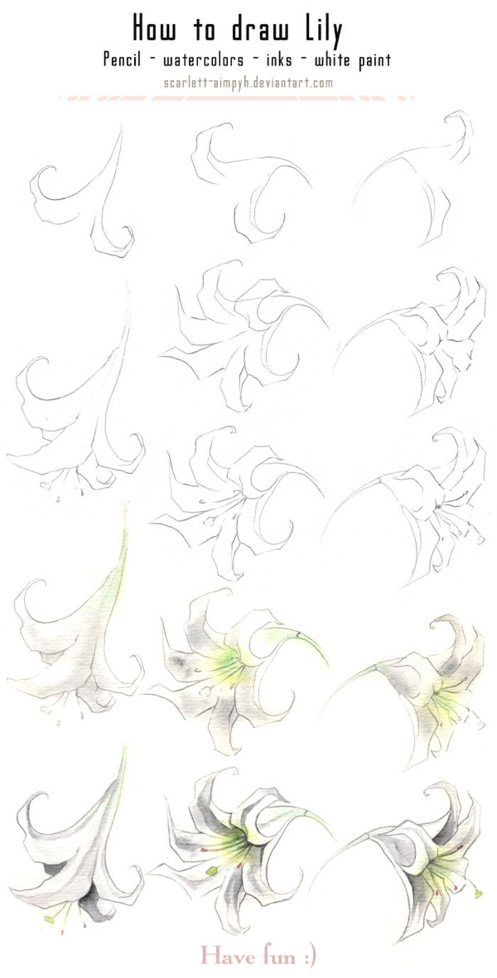 Draw A Lily €� How To Draw Flowersdrawing Flowerspaint