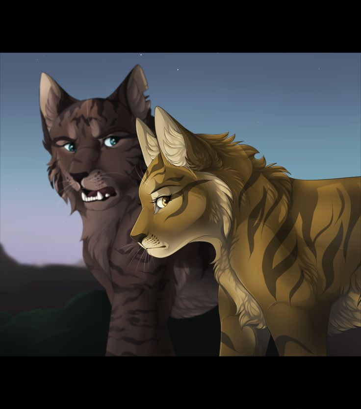 Warrior Cats A Vision Of Shadows Book 1: 17 Best Images About Cat Warriors On Pinterest