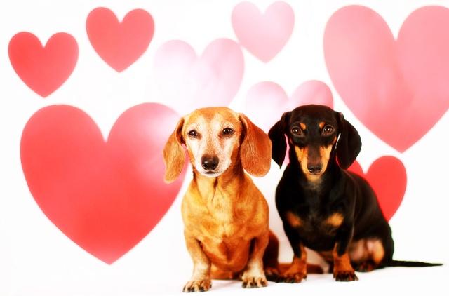 valentine's day in europe