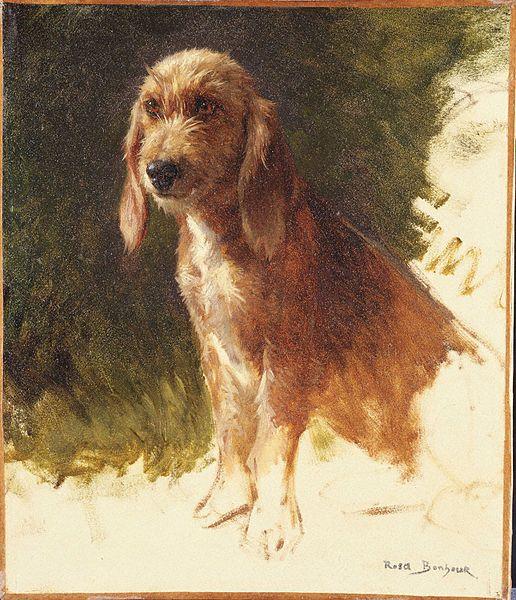 File:Bonheur, Rosa, Study of a Dog, possibly 1860s.jpg