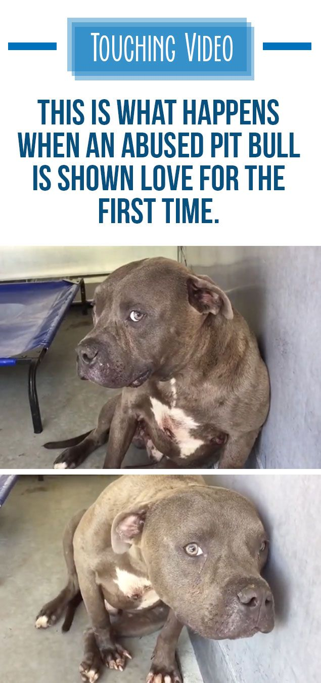 This pit bull looks so happy to finally be loved <3 #pitbull