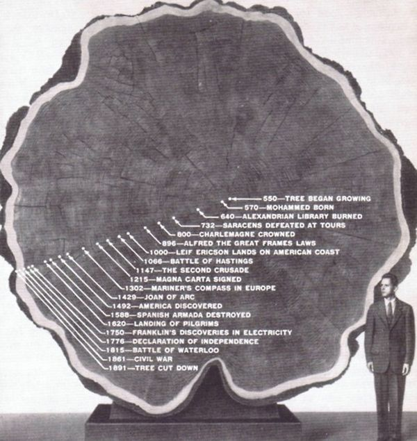 Well, not happy so much as sad that it was cut down but interesting to see the timeline in the tree rings.