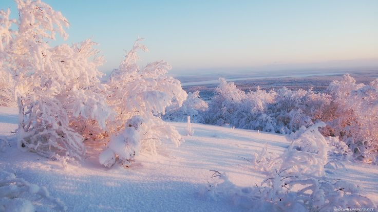 background: Winter Snow, Winter Beauty, Pinkish Color, Winter Lighting, Amazing Landscape, Beauty Place, Pretty Amazing, Amazing Nature, Landscape Photo