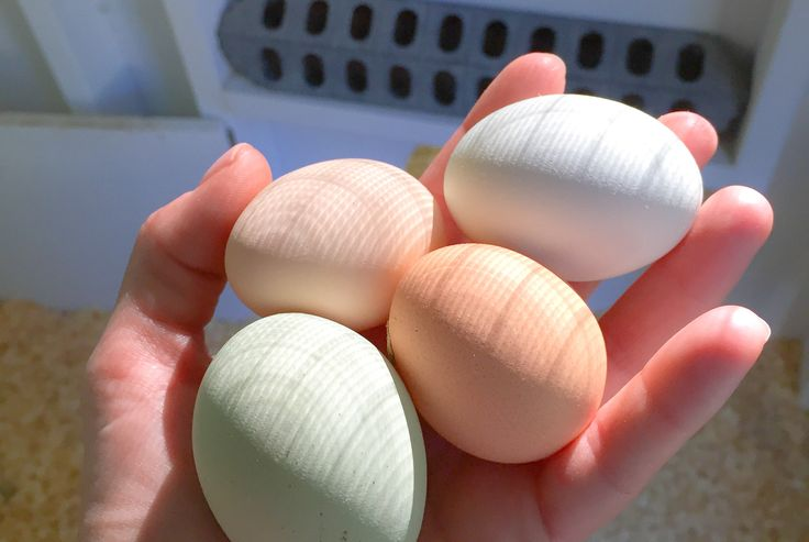 7 Secrets to Clean Chicken Eggs- it's easier than you think!