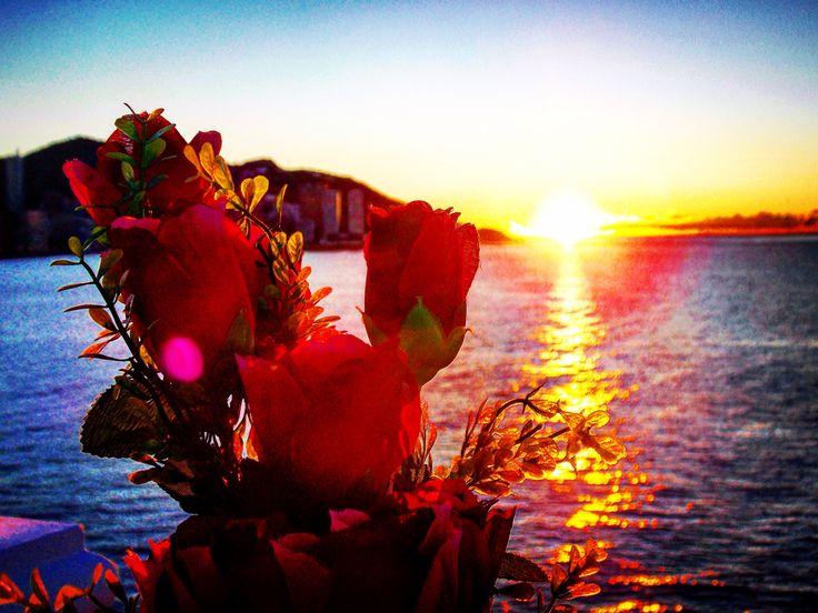 Feliz día de #SanValentín! Desde #Alifornia os mandamos flores psicodélicas para enamorarnos de la vida. :))  #Benidorm #Alicante #CostaBlanca #CaliforniaEuropea www.alifornia.es