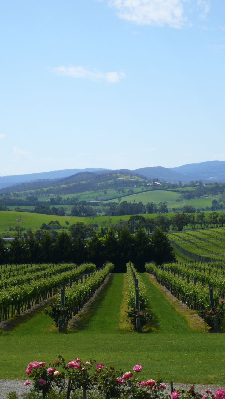 Yarra Valley, Australia | http://www.viewretreats.com/yarra-valley-dandenong-ranges-luxury-accommodation #travel