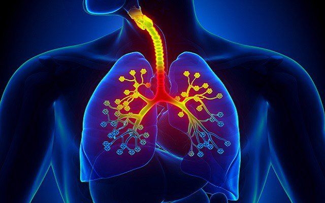 Chemical-based medicine, according to many, is also responsible for the massive rise in various diseases. These seven plants and herbs can heal respiratory infections naturally.