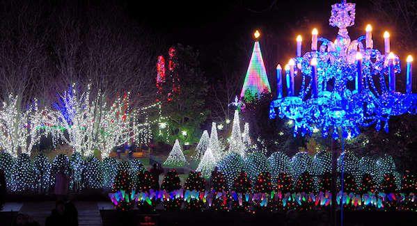 Winter Lights NC Arboretum Asheville | Winter light, Photo tour, Arboretum