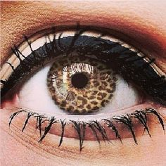 Leopard print contact lens/Okay,for me this is one step too far! I suppose for the younger ones this might be fun. It just looks freaky to me!