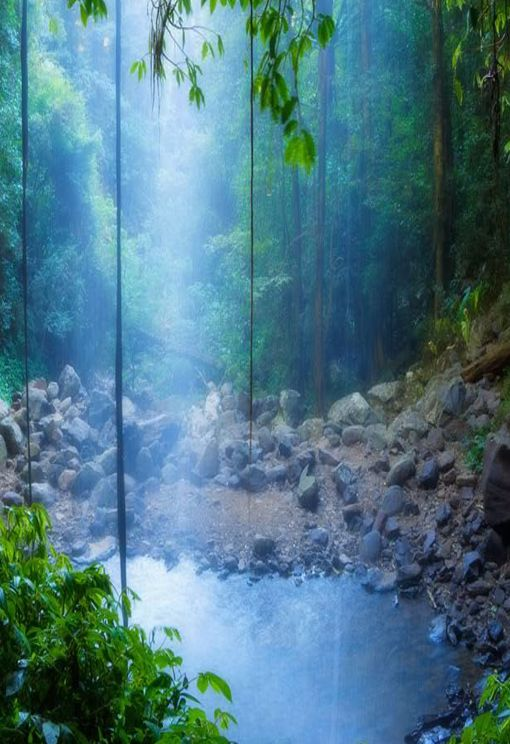 Travel: Cedar Falls, Dorrigo National Park, NSW