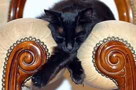 50 examples of Cats Sleeping Anywhere in Awkward Positions | Web Odysseum