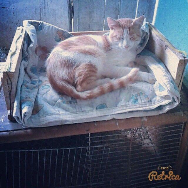 Ya era hora de que usarás tu #cama #pelusa #instacat #instakat #cat #gato