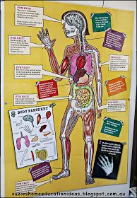 """Over the last few years, my children have been learning about the human body and how it works. Questions such as, """"How does the food get in..."""