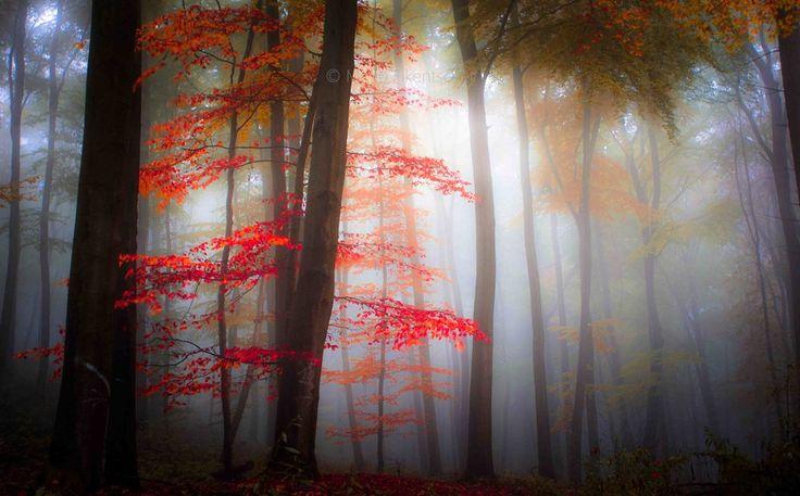 Photo Fog by Mirko  Fikentscher on 500px
