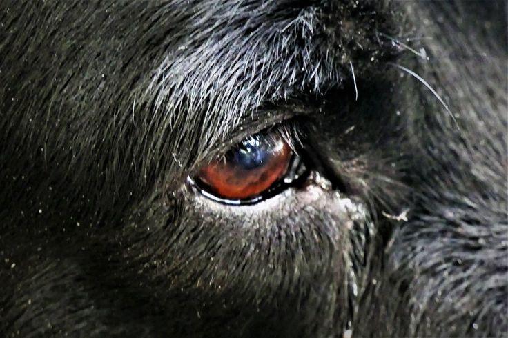 Hechingen: Hundehasser hat Nagelköder ausgelegt!