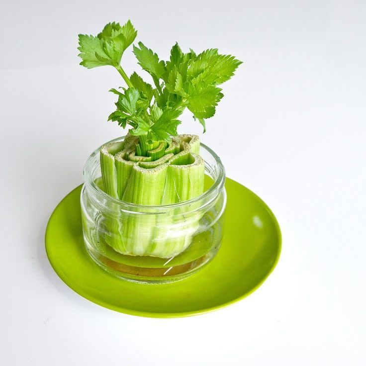 We are talking about regrowing food from kitchen scraps. It sounds to good to be true, but you can easily upcycle everything from lemongrass, onion buts to celery scraps with a great chance of success. So don't throw away those scraps but learn how to regrow them. #Kitchen_Scraps #Gardening